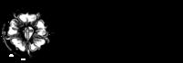 Агентство Collegium Musicum, Евангелическо-Лютеранский Кафедральный Собор св. апостолов Петра и Павла